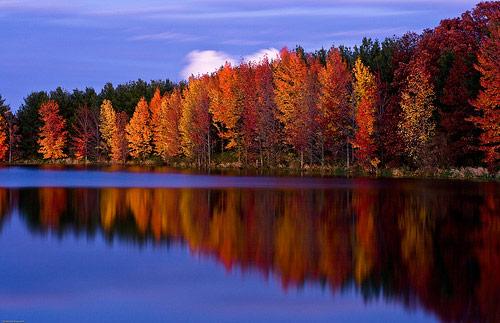 Autumn Foliage Photography