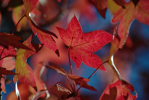 Autumn Foliage Photography