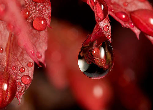 Mind-Blowing Examples of Macro Photography