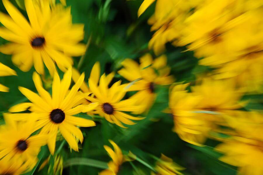Evan - Yellow flowers abstract