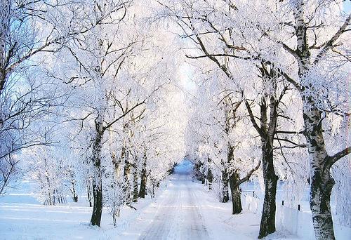 Snow Photography