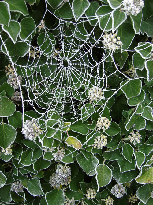 Astonishing Photographs of Spider Webs