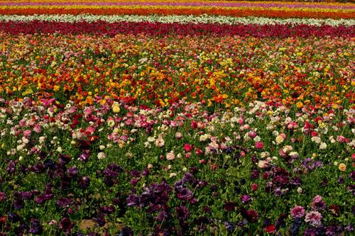 amazing fields