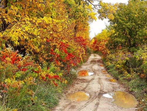 Chris Sorge - Fall-Dirt-Road