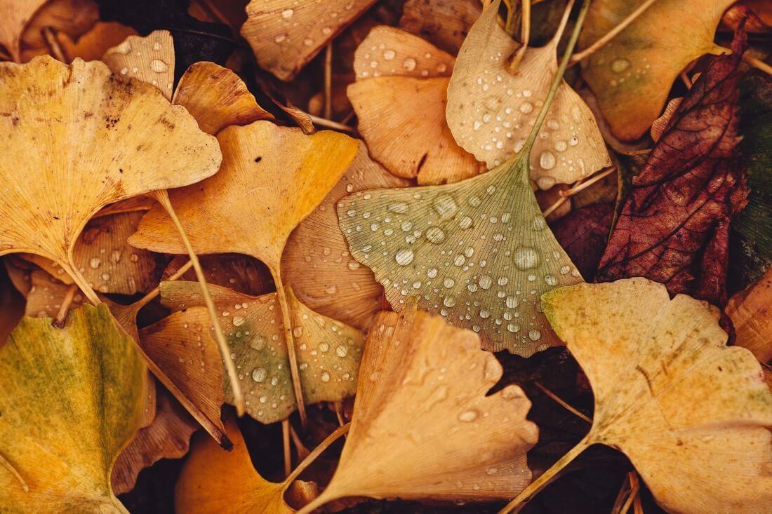 tritra tralala - Autumn Leaves