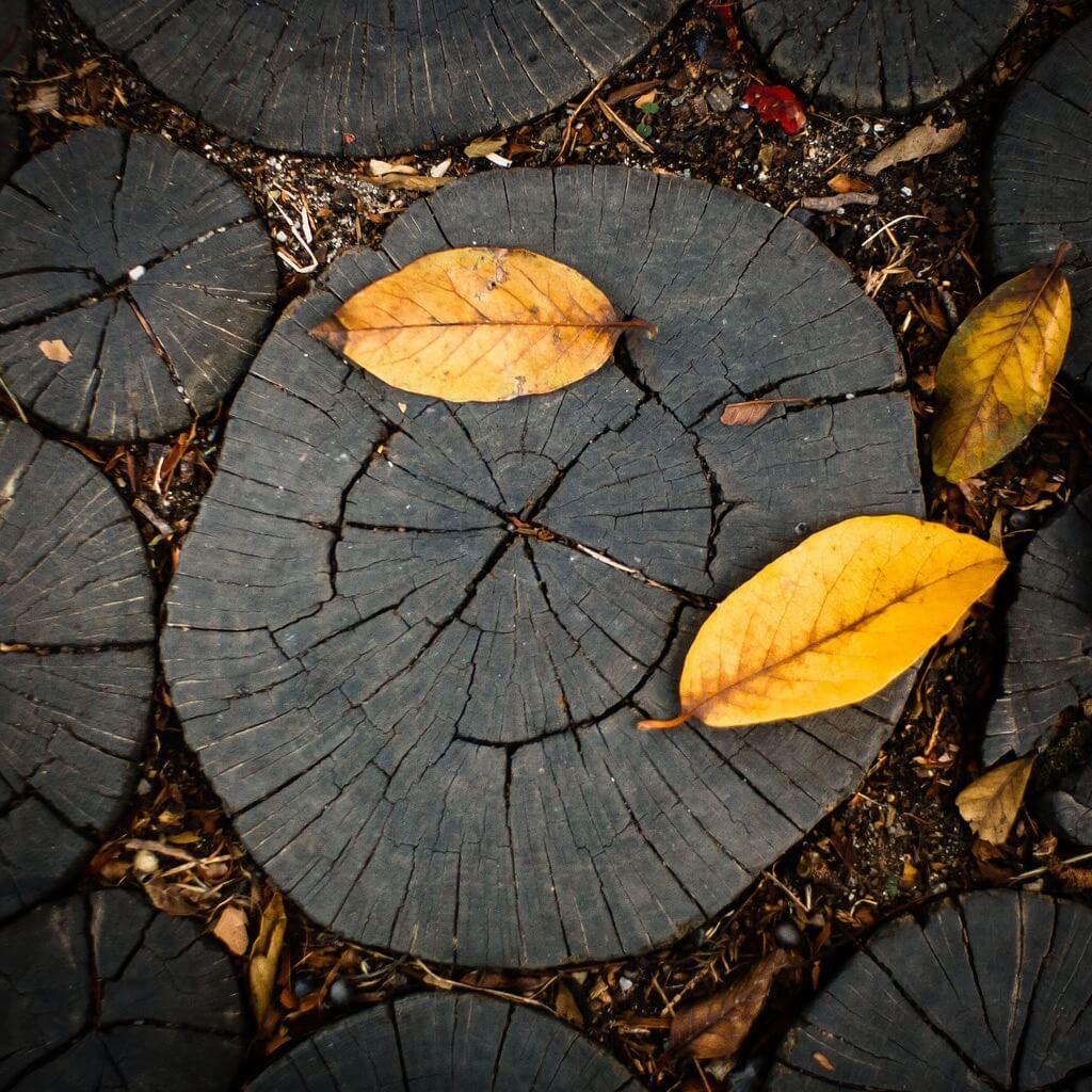 Paul Chiorean - Autumn