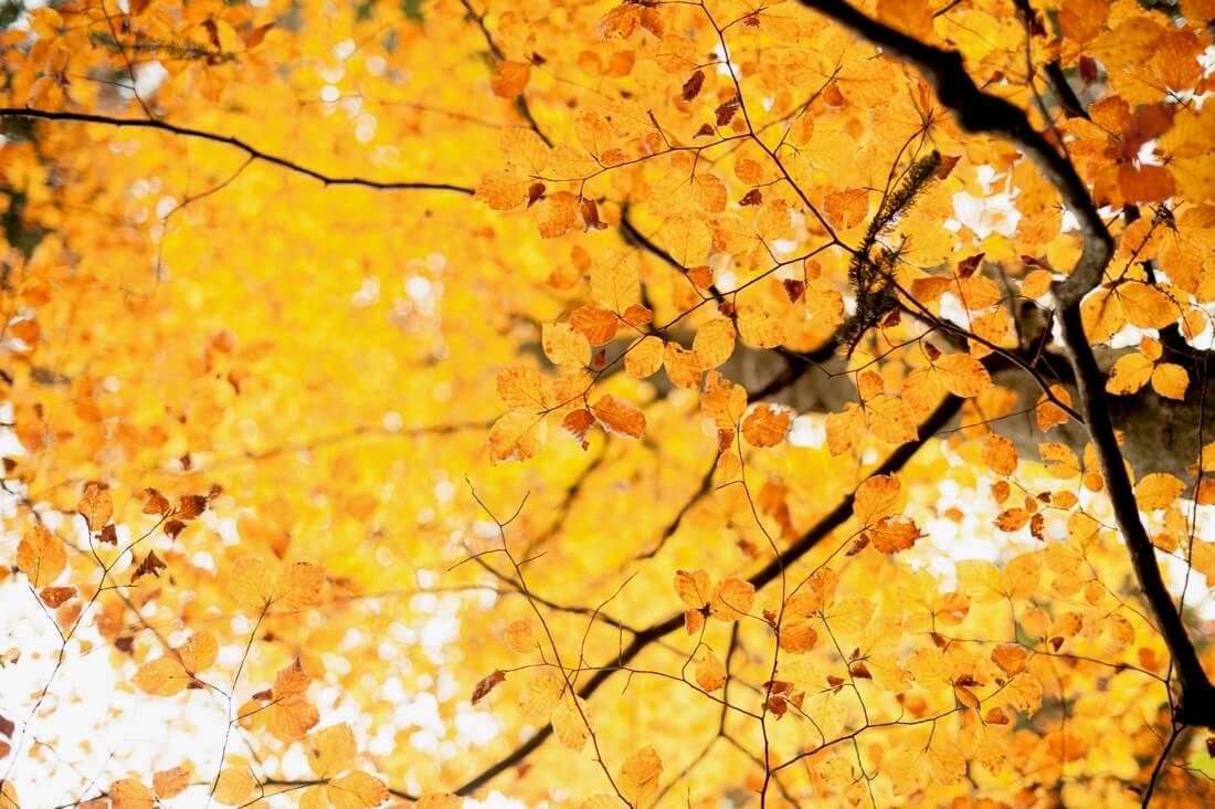 MaxPower0815 - autumn moments....