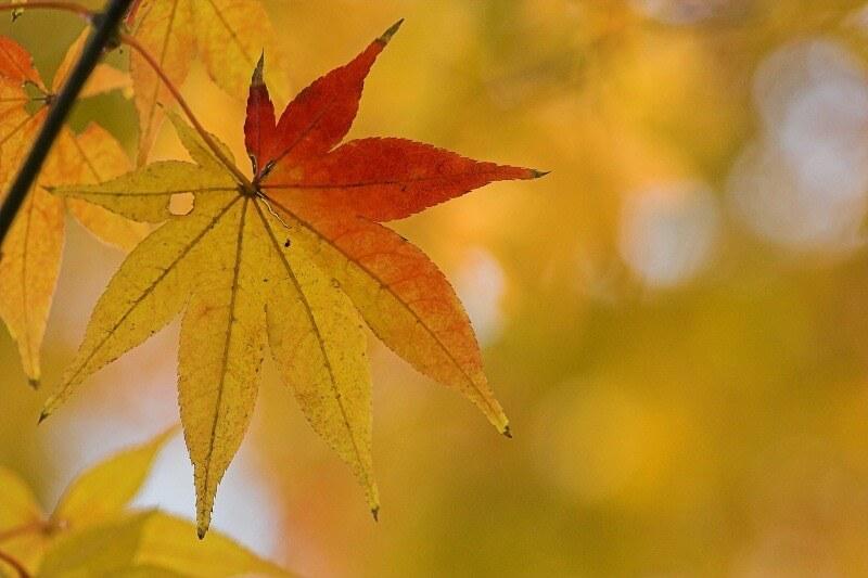 su neko - Autumn tint