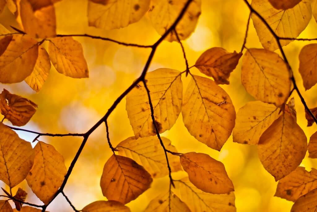 Loic Schulé - autumn beauty