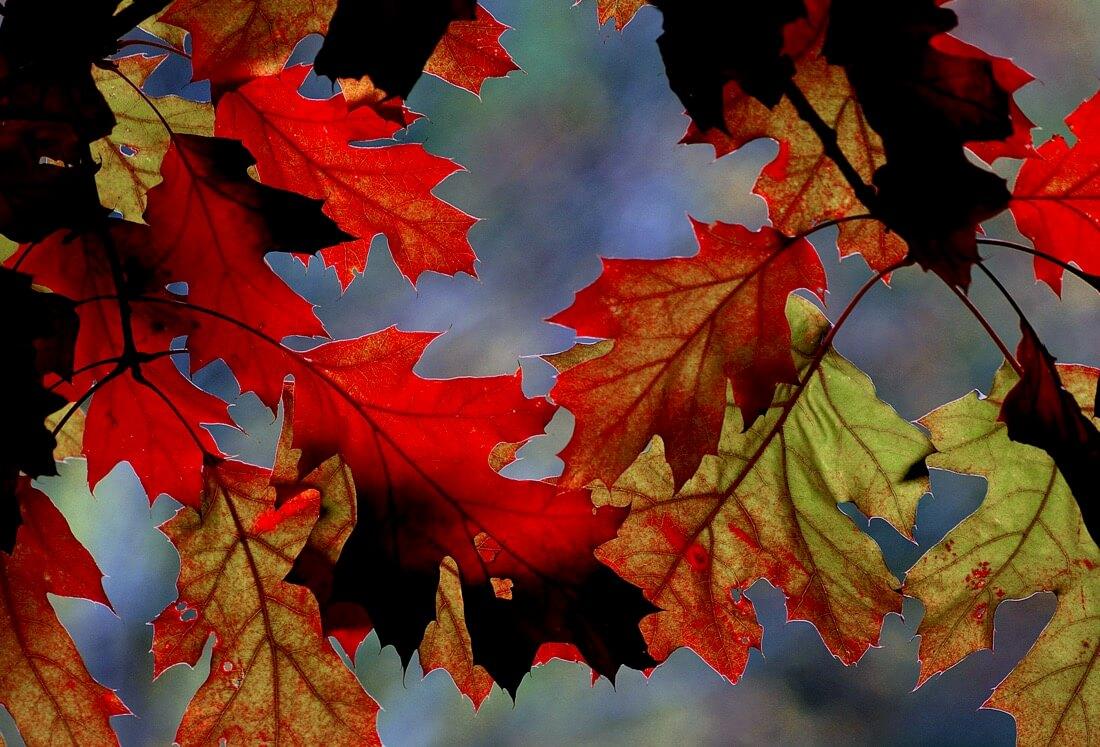 Bernard Spragg. NZ - Autumn hues.