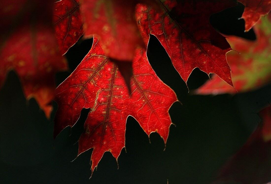 Bernard Spragg. NZ - Seasons colours.