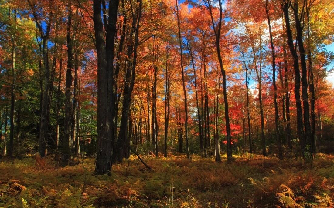 Nicholas A. Tonelli - Autumn Tones