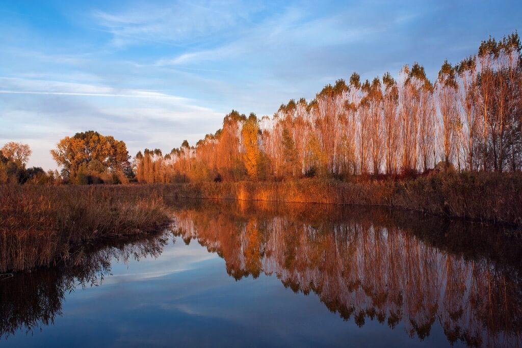 Umberto Salvagnin - Autumn colors