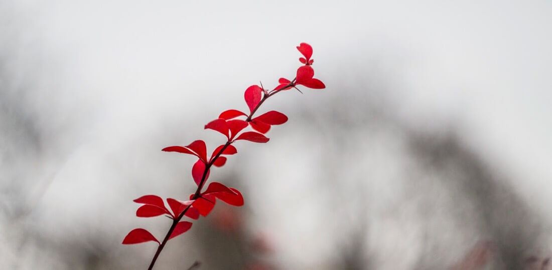Tom Mrazek - Colors of Autumn