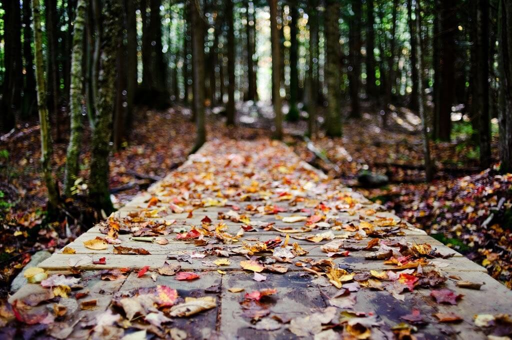lee - autumn