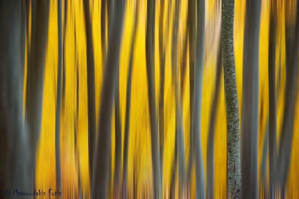 Fotis Mavroudakis - Autumn palette
