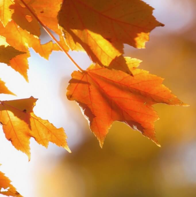 Greg David - Autumn Orange