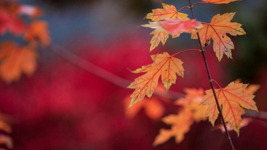 Greg David - Lakeshore's Fall
