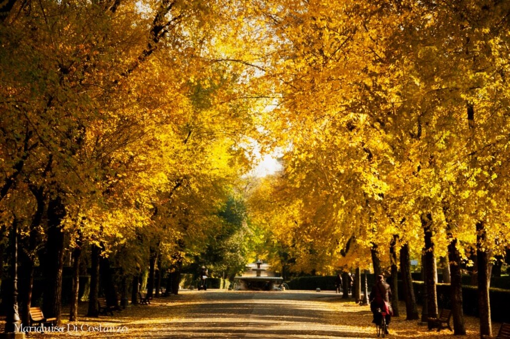 Mary-Eloise - Autunno giallo
