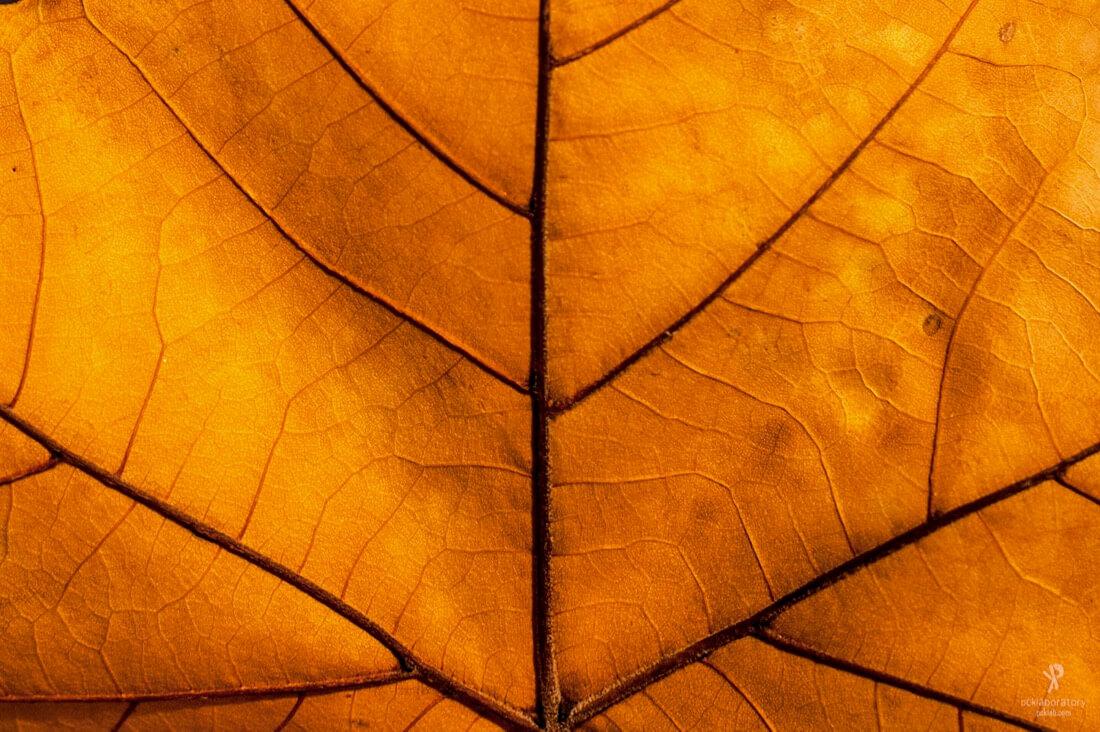 Yane Naumoski - Autumn texture