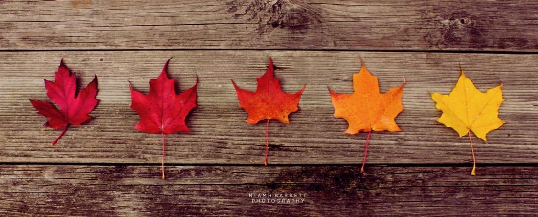 Niamh <> - Fall Colours