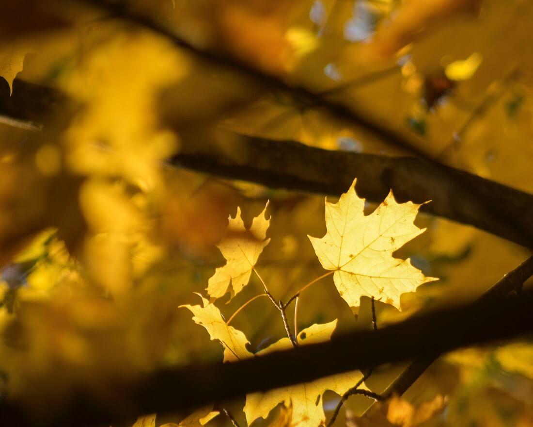 Thomas - Autumn Spotlight, Ridley Creek State Park, Pennsylvania