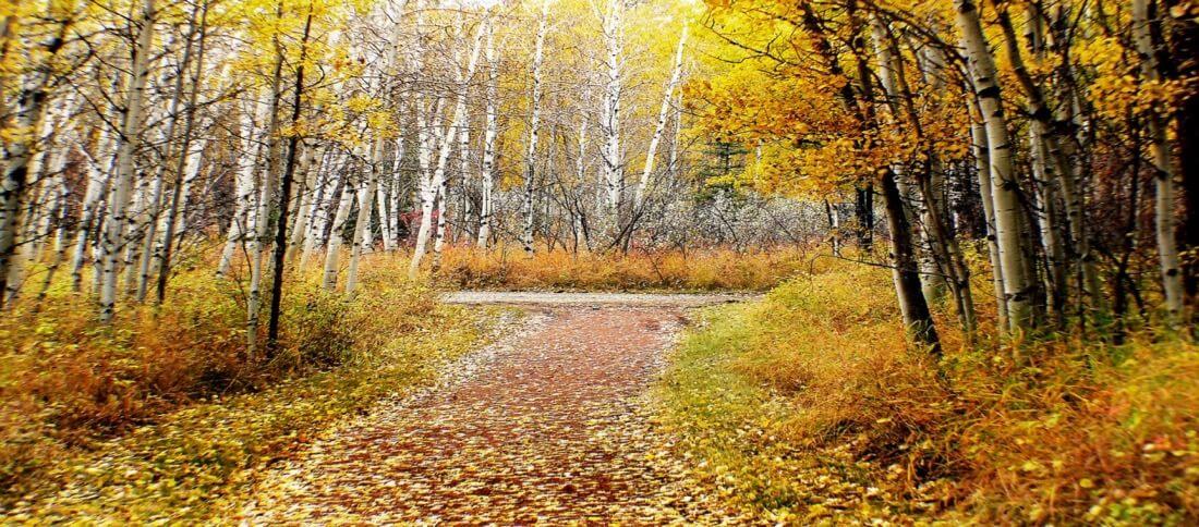 Bernard Spragg. NZ - Autumn Calgary Alberta