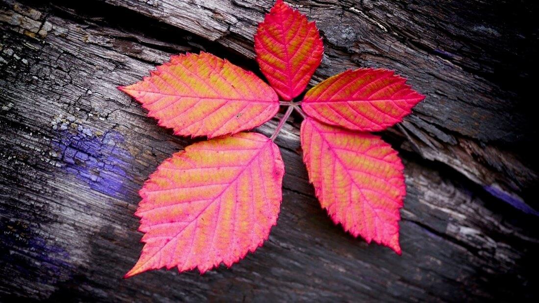 Angie Trenz - hello autumn