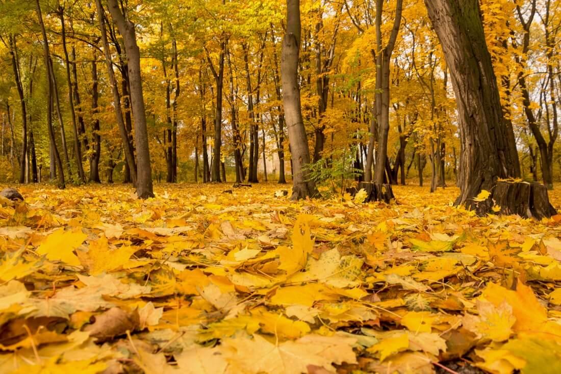 Anton Vakulenko - Autumn park