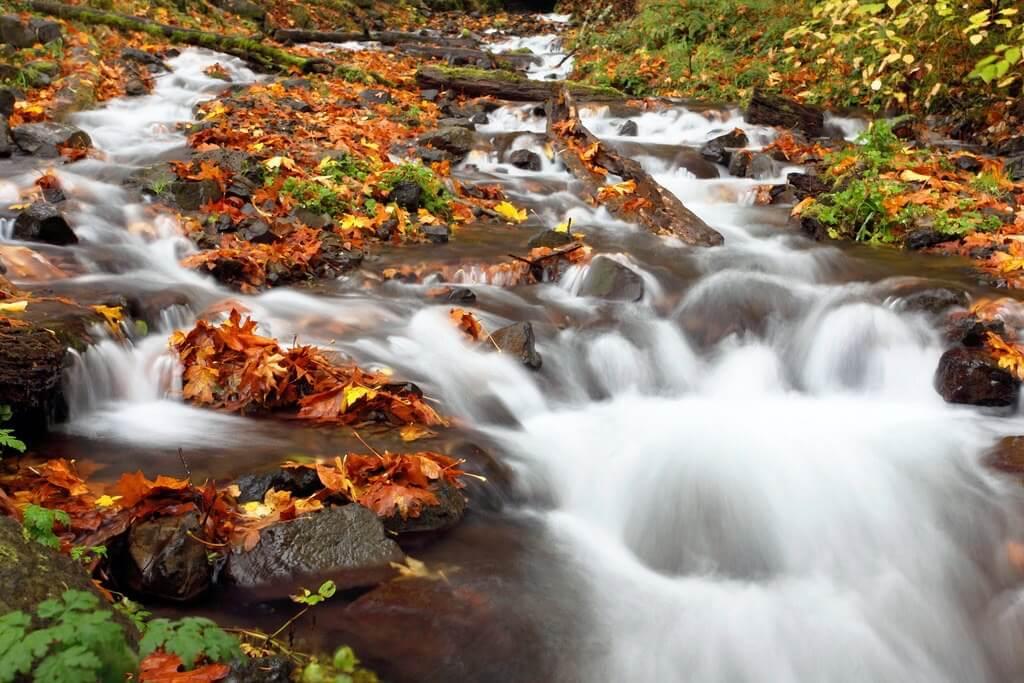 Ian Sane - Autumn Euphoria