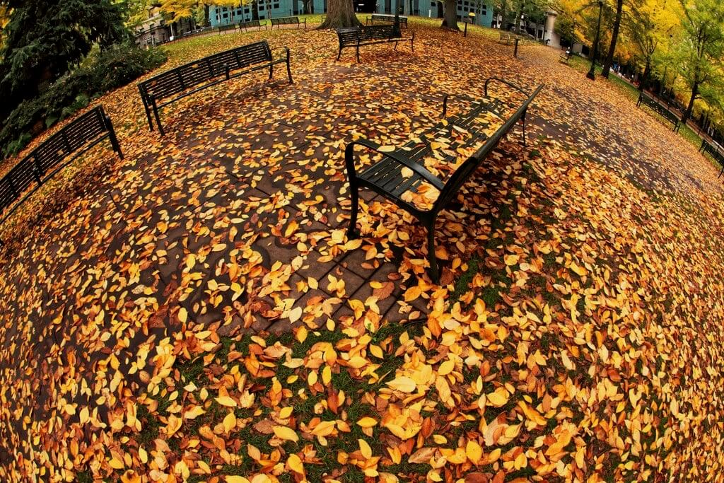 Ian Sane - Autumn Planet