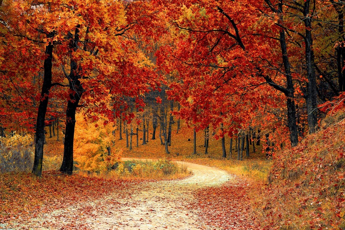 Adam Asar - fall autumn red season