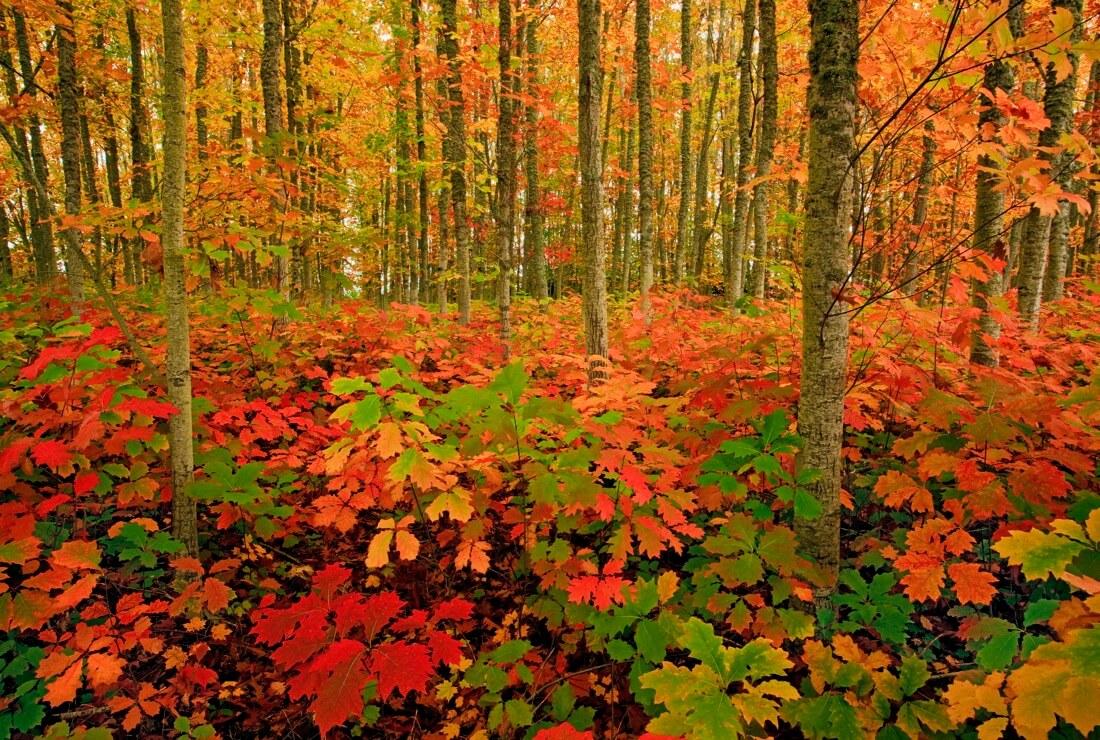 Ian Sane - Autumn Forest