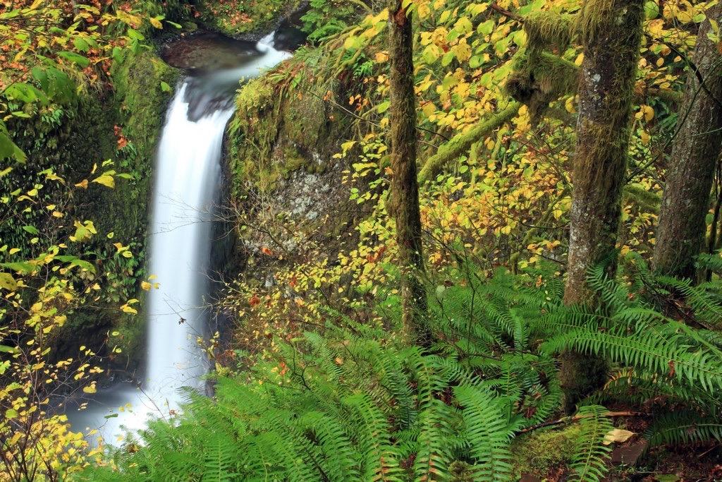 Ian Sane - Peaceful Watercourse