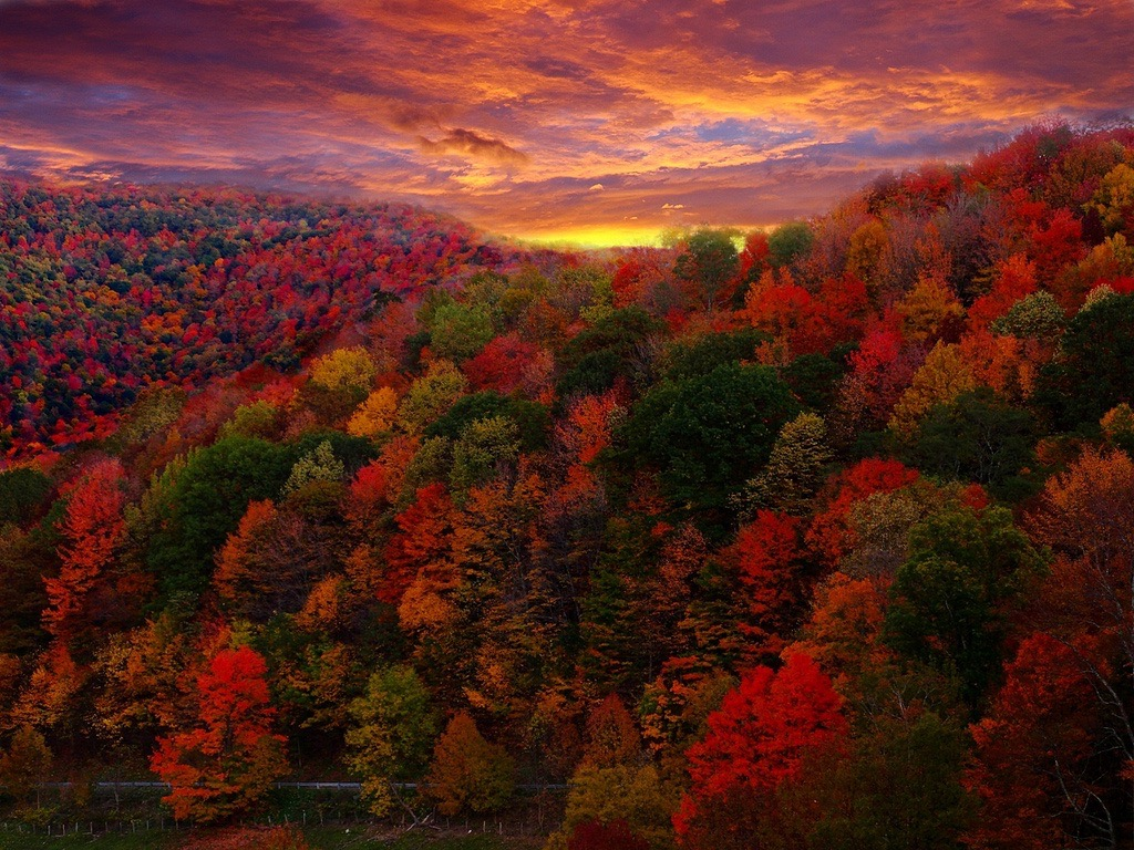 Forest Wander - Fall Foliage Photography