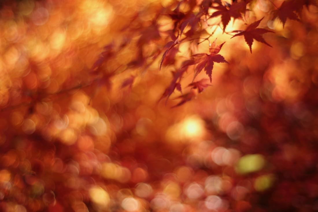 けんたま/KENTAMA - Autumn glory
