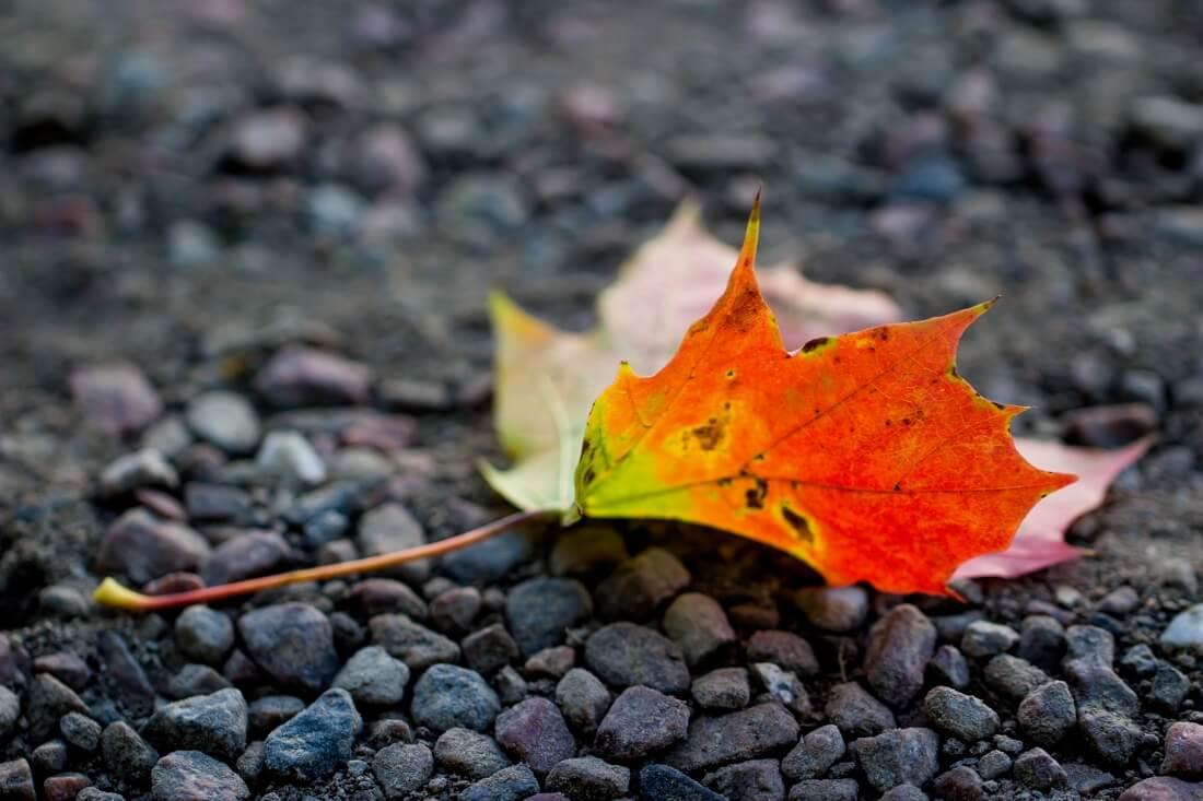 Susanne Nilsson - Colorful autumn