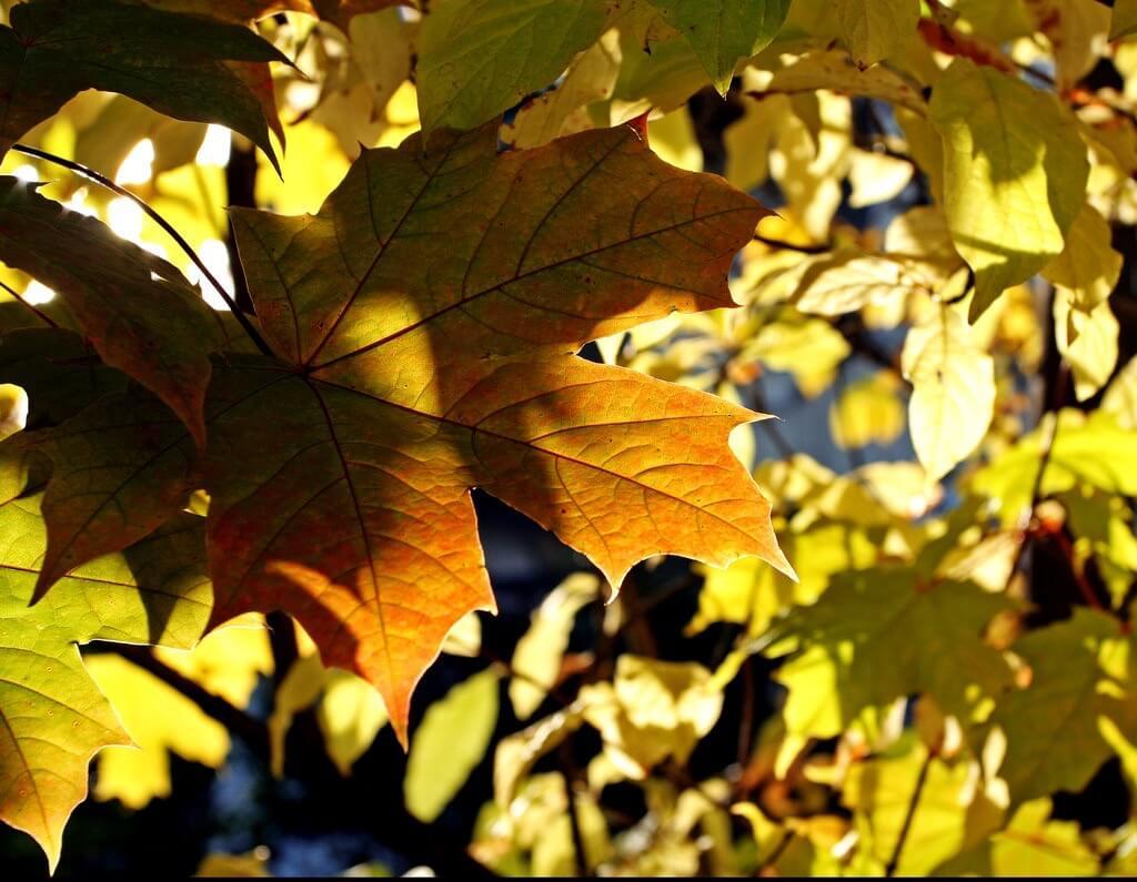 Sharon Mollerus - Autumn Afternoon