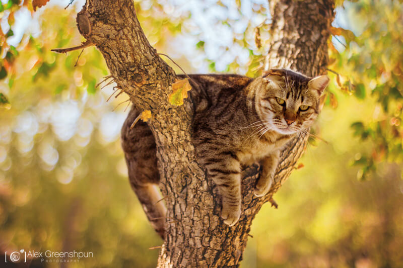 bokeh cat in tree