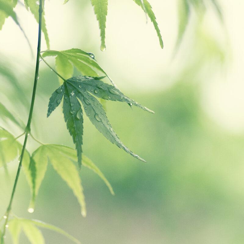 bokeh leaves