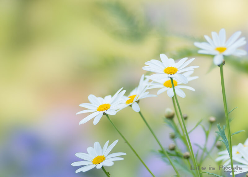 bokeh flowers