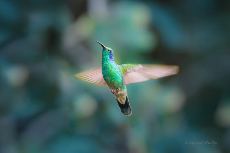 bokeh hummingbird