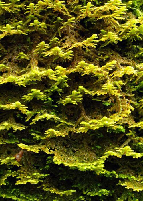 Moss Photography