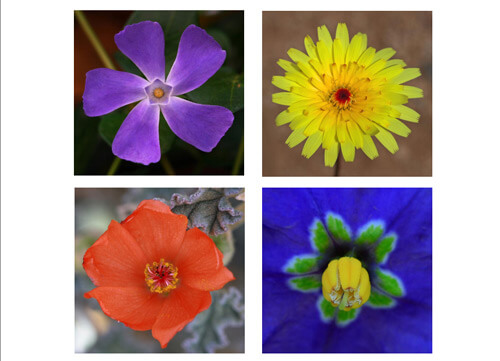13 tips for better wildflower photography