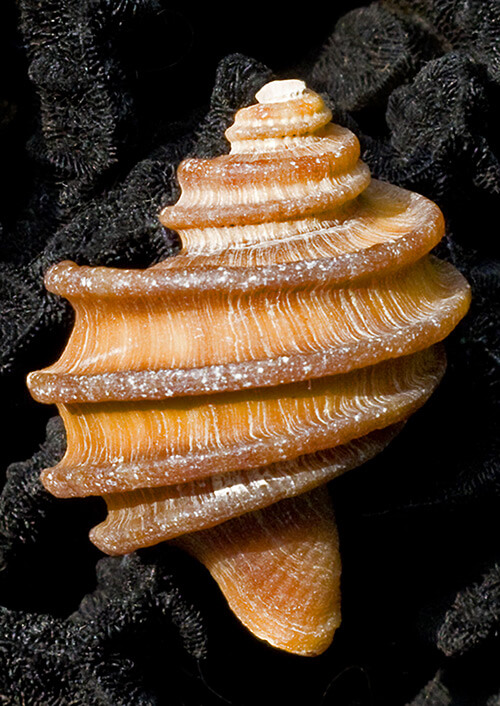 Seashell Photography