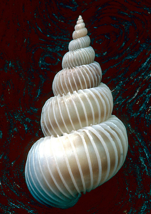 Shells are Swell: Beautiful Examples of Seashell Photography