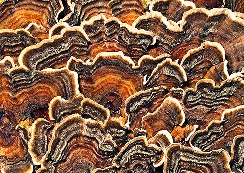 Fungi Photography