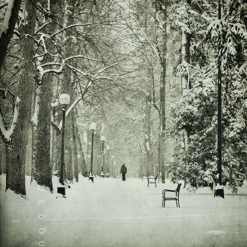 black and white forest with snow