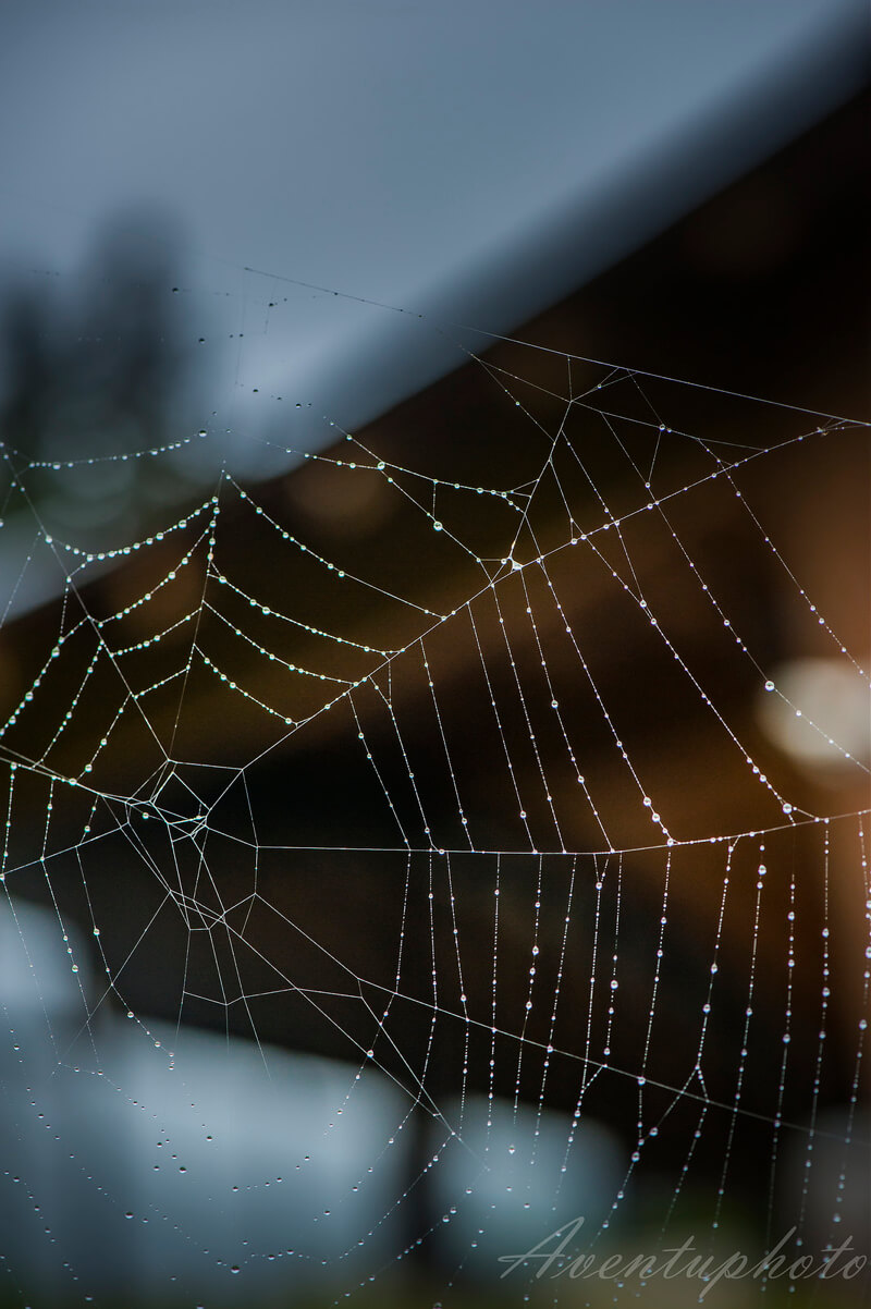 30 Astonishing Photographs of Spider Webs
