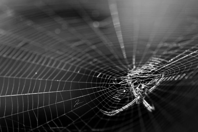 30 astonishing photographs of spider webs